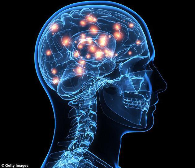 """由于树突在体积上比神经元中心大将近100倍,这一结果不仅意味着大脑具有的计算能力可能是原先预想的100倍,而且为未来""""似大脑计算机""""的开发铺平了道路。"""