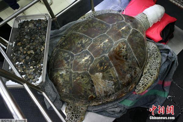 """泰国海龟误吞915枚许愿币 """"洗胃""""后不幸去世"""