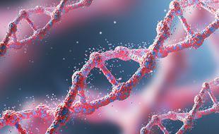 基因突变帮助早期人类适应了新的食物
