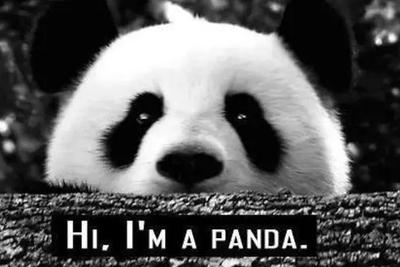 大熊猫真实战斗力:戴墨镜的都不好惹