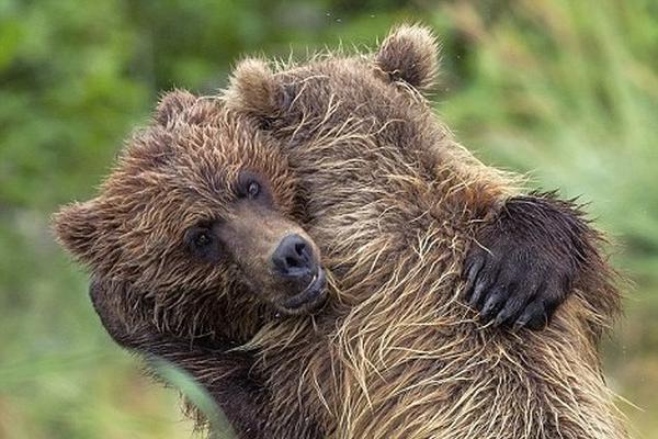 小熊兄妹重逢暖心瞬间