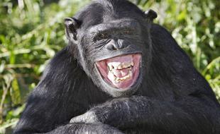 大猩猩在野外看到VR相机,竟然……