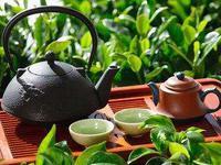 流言揭秘:春茶含过量农药?