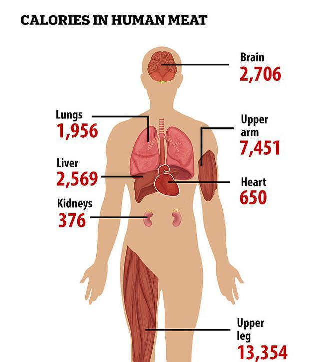 一项最新研究揭示了食用人类身体不同部位所能够获取的卡路里数量