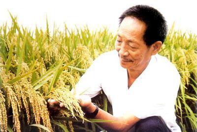 袁隆平透露超级稻最新进展:17吨/公顷已有九成把握