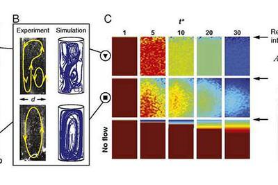 生命的基本组件是如何形成的?海底热泉或起促进作用