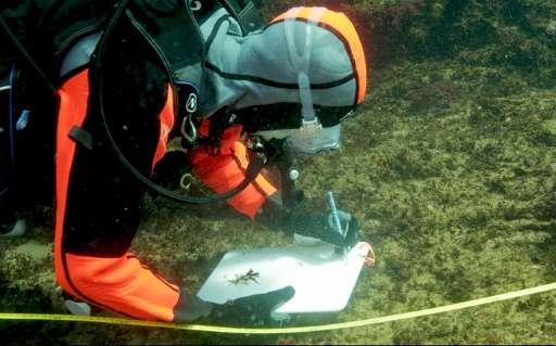 式根岛拥有独特的生态环境。这座岛屿由水下火山形成,因此其海水的二氧化碳不断增多,碱性弱化,酸性增强。这与科学家们想像中的到2100年全球海洋由于碳排放问题的影响而产生的变化情景很相似。