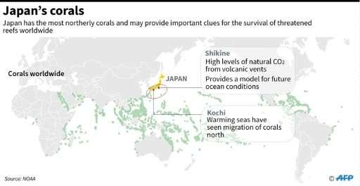 日本的珊瑚或许可以为世界其它地方的海洋生物提供重要的生存秘方。