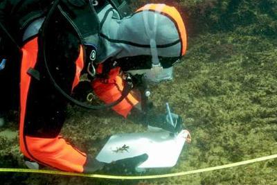 日本火山岛海水中或存在拯救珊瑚礁秘方