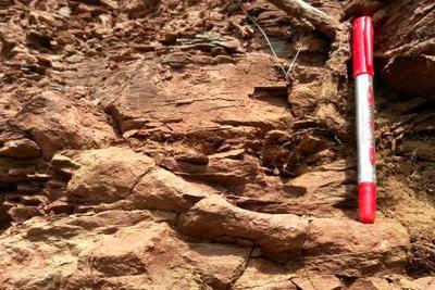 陕西铜川发现罕见2.5亿年前远古生物陆地活动遗迹