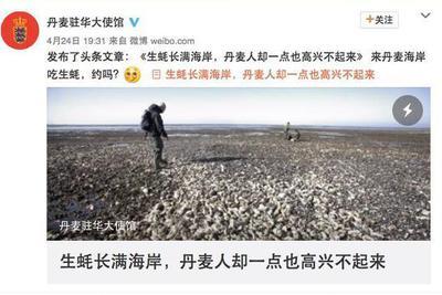 """丹麦生蚝泛滥 网友提议让中国人帮忙""""吃掉""""困难"""