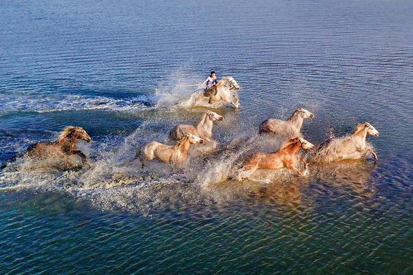 无人机抓拍野马渡河:骏马奔腾踏水破浪气势磅礴