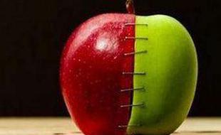 转基因作物种植现状:面积再创新高