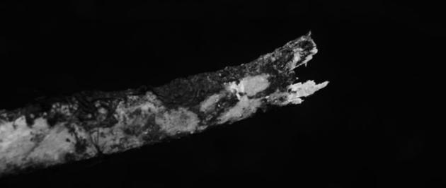 图为鹿在啃咬骨头时留下的特殊叉子状痕迹。