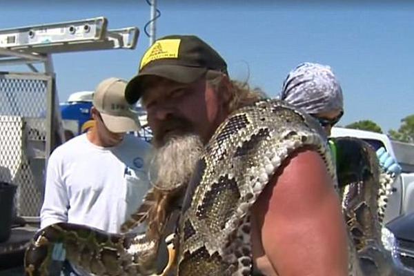美国展开蟒蛇清除行动:最大个体5.2米长带78颗卵