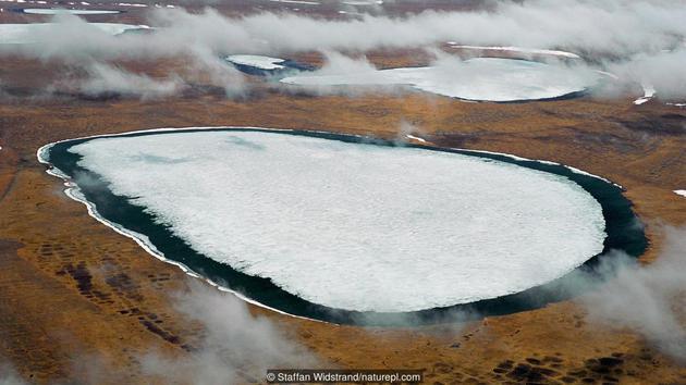 西伯利亚永冻土分布区的苔原景观