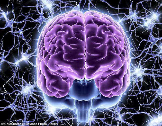 """研究人员们表示他们发现了大脑的一个关键区域,该区域能够在对话过程中识别某些特殊的声音,从而帮助预测接下来对方要说的是什么单词。未来有朝一日,人类或许将有望利用这项技术研发出某种设备,能够直接""""阅读""""用户的思想"""