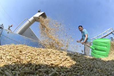 报告称2050年全球粮食将不够吃 人口或达90亿