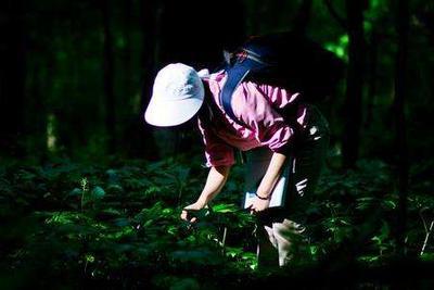 全球新发现1730个植物品种 不少有食用和药用价值