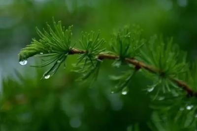 流言揭秘:雨后空气中有泥土味?真相是这样!