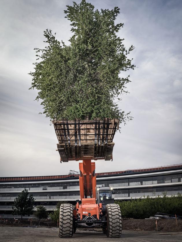 """建筑师斯蒂芬·贝林说,对乔布斯来说:""""树木是最美丽的艺术""""。他以前经常说,""""关于树木最神奇的地方在于,无论多么有钱,你都买不到一棵真正古老而美丽的树。"""""""