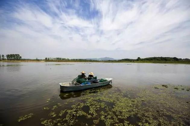 2017年5月26日,养殖户在江西都昌县汪墩乡龙泽龙虾养殖基地捕捞小龙虾。图/CFP