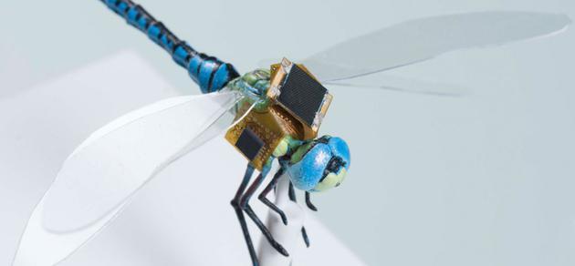 """基因改造的""""蜻蜓赛博格"""":变身人类操控微型无人机"""