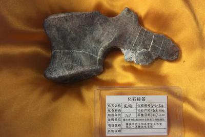 重庆发现世界级恐龙化石群 或填补恐龙时空分布空白
