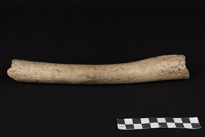 重写历史的化石:47万-22万年前早期人与穴居人交配