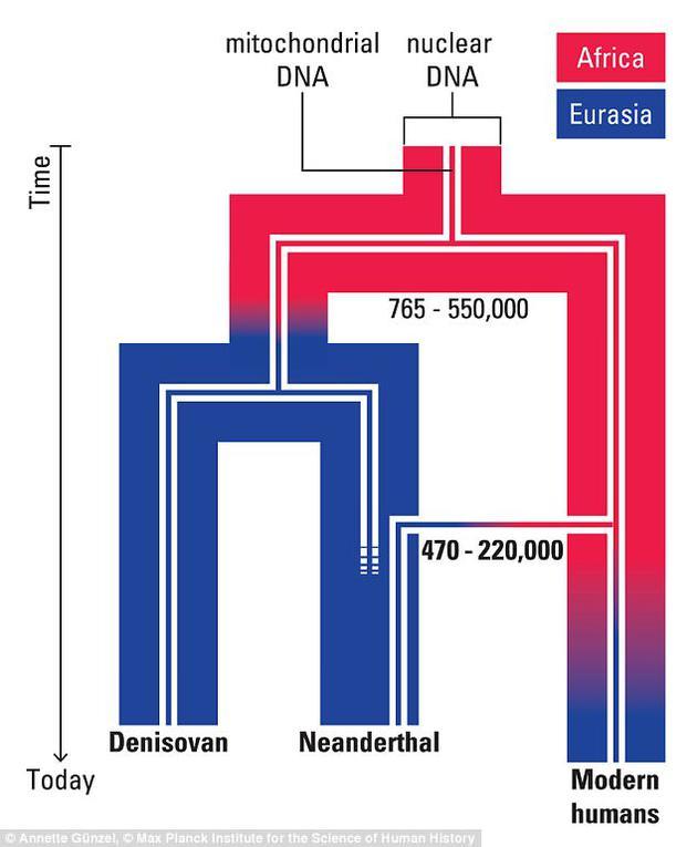 最新发现的一根股骨化石获取的基因数据显示,它属于12.4万年前的穴居人,表明穴居人祖先到达欧洲不久,早期人类就开始离开非洲向欧洲迁移。科学家认为,早期人类与穴居人发生交配行为是47万-22万年前,比之前预想晚30万年时间。