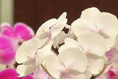 一公司丢失了一盆花 这盆花价值高达2000万元