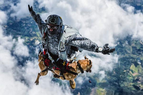 搜救犬从4300米高空跳伞飞降而下:淡定自若画面唯美