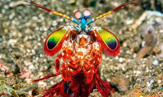 最新研究揭晓动物的彩色视觉能力