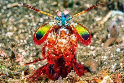 科学家最新研究揭晓动物的彩色视觉能力