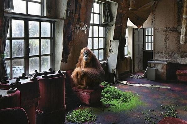 无人之境:人类灭亡后世界将会如何?动物成主人