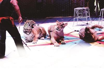 广州动物园终止马戏表演引关注马戏团:将继续表演