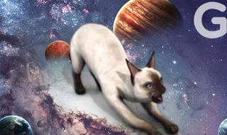 别小看猫咪和狗狗:它们曾是宇航员