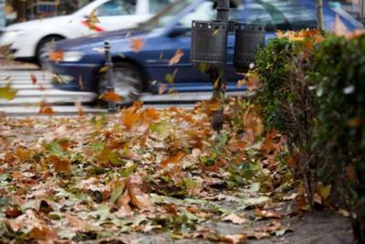 用落叶储存能量,可以减少雾霾污染