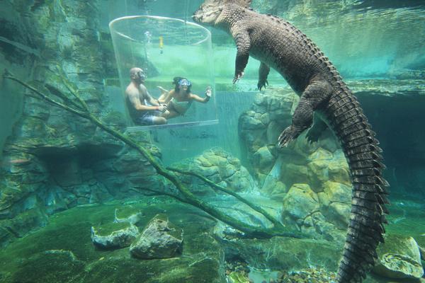 """澳洲鳄鱼湾乐园""""死亡之旅"""":与凶猛巨鳄零距离接触"""
