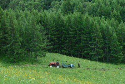 中国森林覆盖率续增 与日本木材交易角色互换