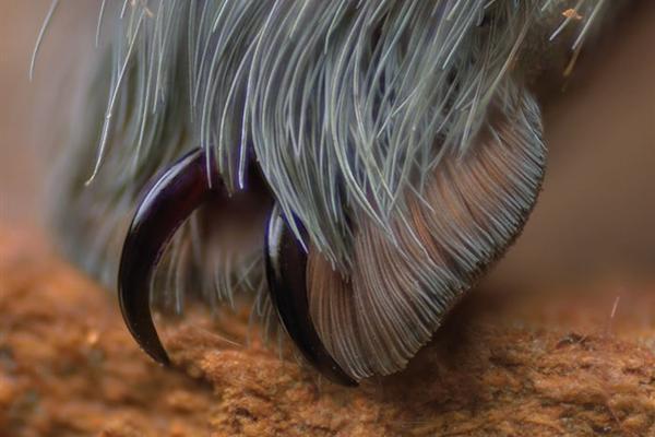 蜘蛛可怕吗?近距离看它的腿居然萌萌哒