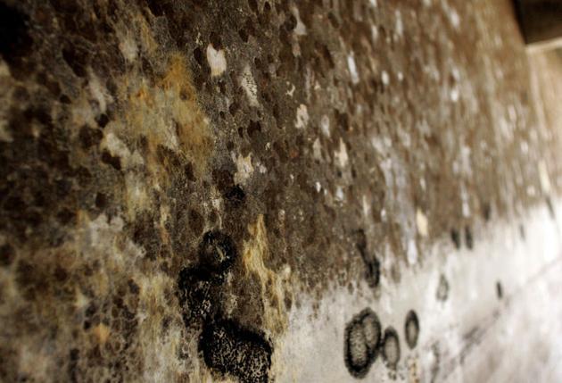 每天吸入数十亿颗霉菌孢子,我们为何仍安然无恙?