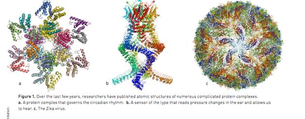 图一过去几年间,科学家陆续发布了多种复杂蛋白质复合体的原子结构。a. 一种控制昼夜节律的蛋白质复合体。b. 一种可感知耳中压力变化、使我们听到声音的感应器。c. 寨卡病毒。