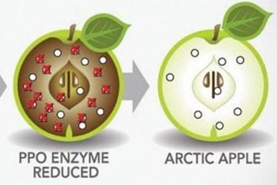 转基因苹果即将在美国上市,切开三周不变色