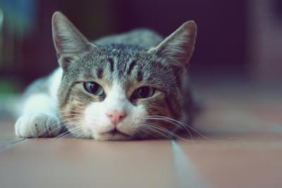男子被猫抓伤半年后脑萎缩死亡,医院诊断或为狂犬病