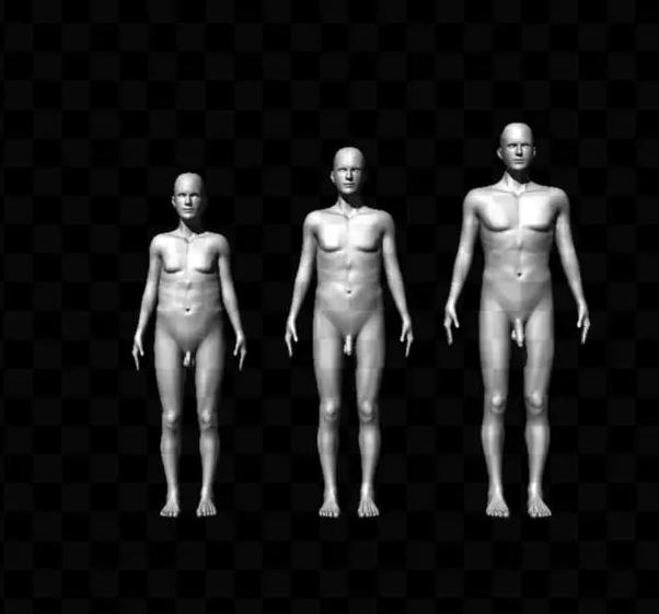 科学家使用电脑模拟不同尺寸的生殖器,女性被试对比照片选择自己最青睐的尺寸(图片引自文献Mautz et al. 2013)