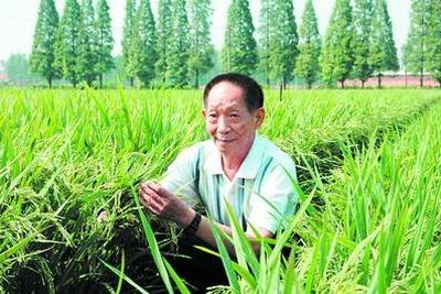 示范田多产3万公斤:袁隆平团队如何创水稻亩产纪录