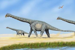 恐龙粪便滋养大地