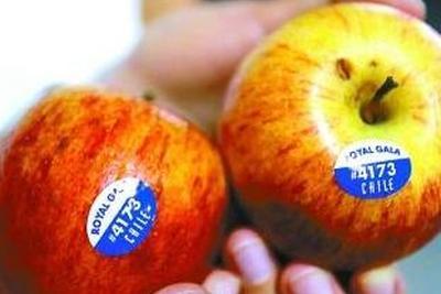 抗褐变转基因苹果在美上市 为基因编辑食品铺路