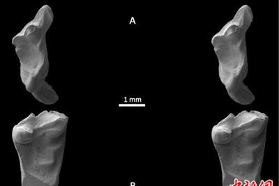 来自人类的祖先?英国发现1.45亿年前动物牙齿